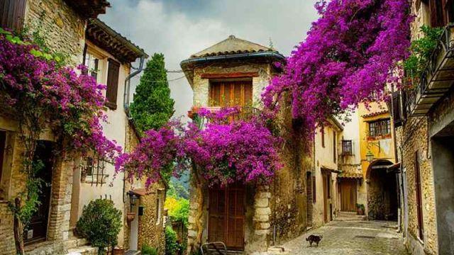 provence-france.jpg