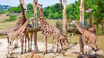 zoo-praha.jpg